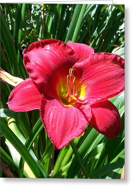Photographs With Red. Greeting Cards - Red Lily Greeting Card by Mary Burris