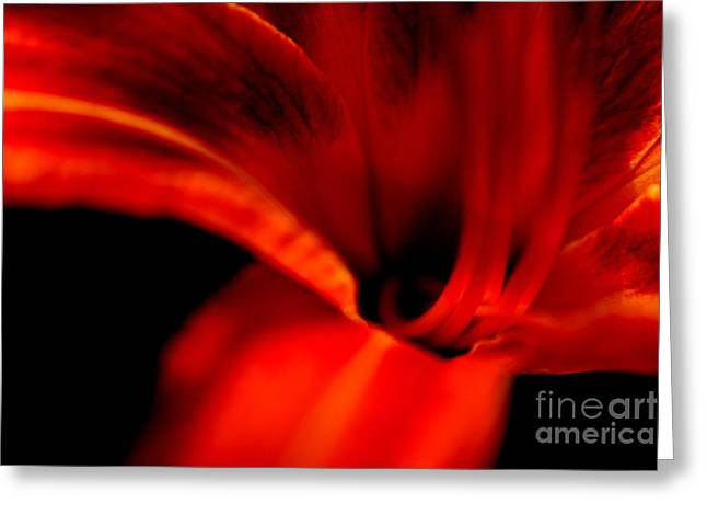 Wildflower Photography Greeting Cards - Red Orange Lily Travels  Greeting Card by Neal  Eslinger