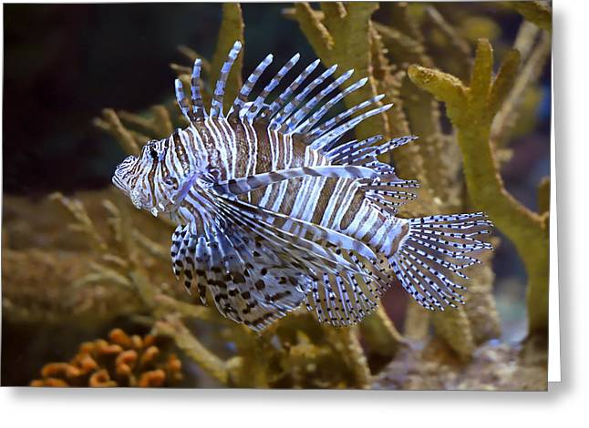 Lionfish Greeting Cards - Red Lion Greeting Card by Tony Beck