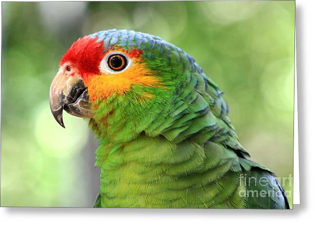 Red-lored Amazon Parrot Greeting Card by Teresa Zieba