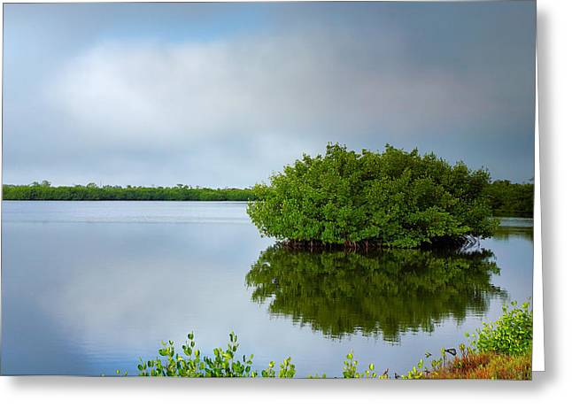 J N Ding Darling National Wildlife Refuge Greeting Cards - Red Mangrove Marsh I Greeting Card by Steven Ainsworth