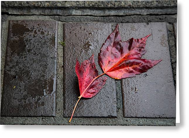 Maple Photographs Greeting Cards - Red Maple Bricks Greeting Card by John Daly
