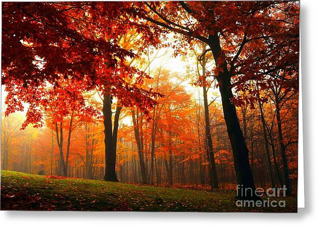 Red Maple Forest Greeting Card by Terri Gostola