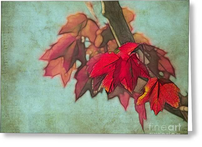 Judi Bagwell Greeting Cards - Red Maple Greeting Card by Judi Bagwell