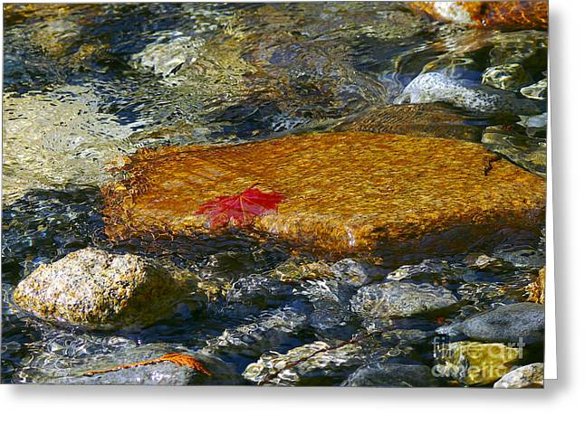 Stones In Water Greeting Cards - Red Maple Leaf in Stream Greeting Card by Sharon  Talson