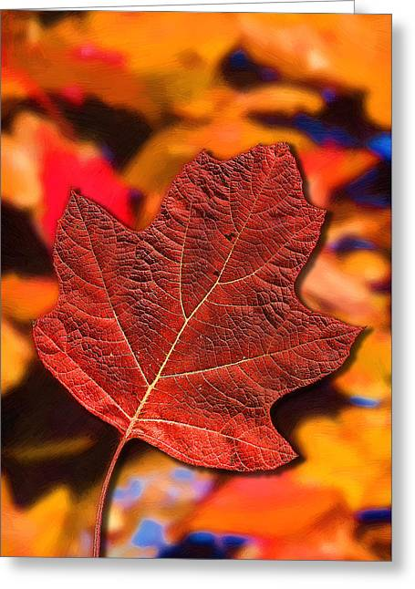 Western North Carolina Greeting Cards - Red Maple Leaf on an Abstract Painting Greeting Card by John Haldane