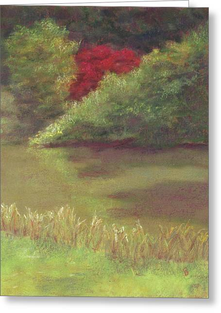 Sudbury Ma Pastels Greeting Cards - Red Maple Greeting Card by Stacey David