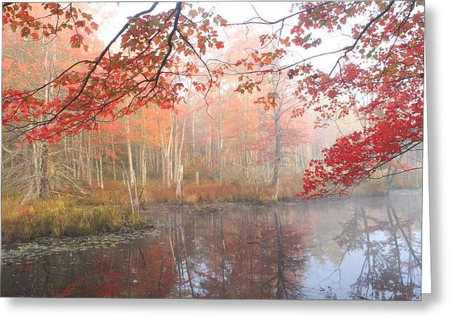 Red Maple Wetland Fall Foliage Greeting Card by John Burk