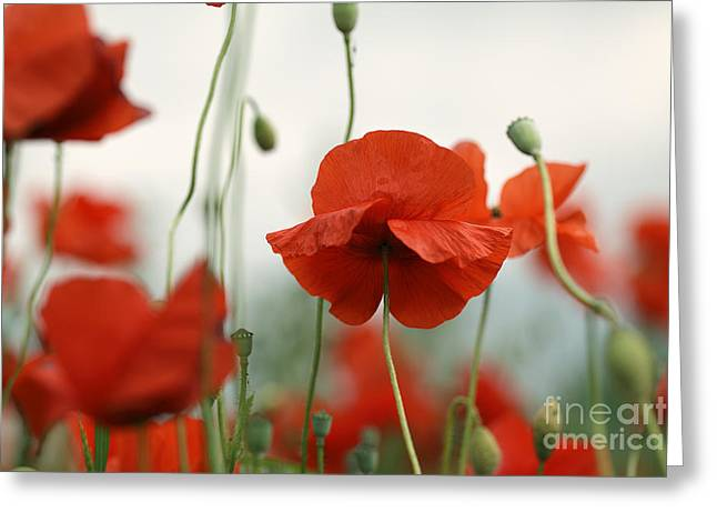 Field. Cloud Greeting Cards - Red Greeting Card by Nailia Schwarz