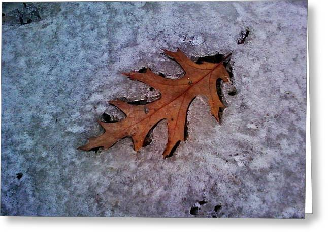 Winter In Maine Greeting Cards - Red Oak Impression Greeting Card by Merridy Jeffery