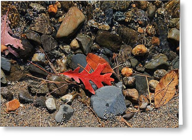 Red Fallen Leave Greeting Cards - Red Oak Leaf Greeting Card by Michael Saunders