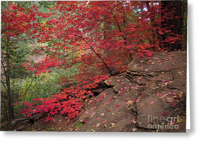 Slickrock Greeting Cards - Red on Red Greeting Card by Marianne Jensen