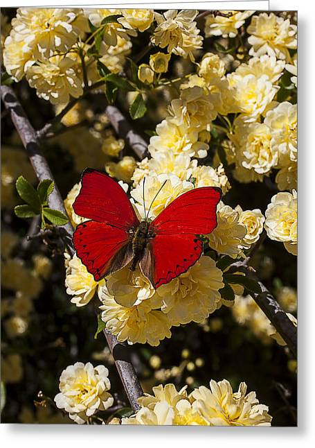 Gorgeous Photographs Greeting Cards - Red on yellow pyracantha flowers Greeting Card by Garry Gay