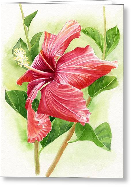 Costa Paintings Greeting Cards - Red Orange Hibiscus Greeting Card by Sharon Freeman