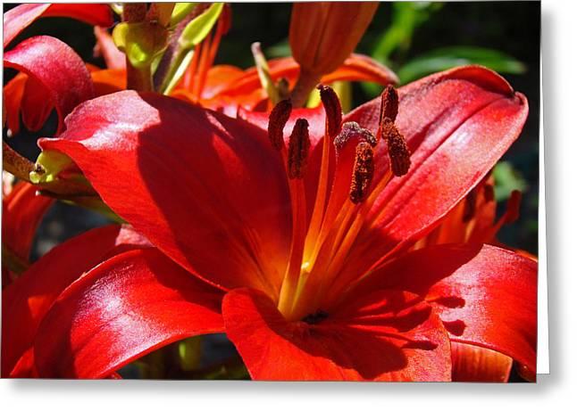 Lilies Framed Prints Greeting Cards - Red Orange Lily Flowers Art Prints Greeting Card by Baslee Troutman