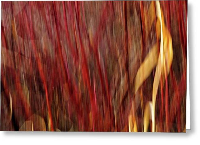 Impressionist Photography Greeting Cards - Red Osier Dogwood Greeting Card by Theresa Tahara