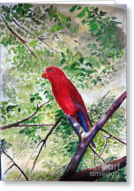 Mangrove Forest Greeting Cards - Red Parrot of Papua Greeting Card by Jason Sentuf