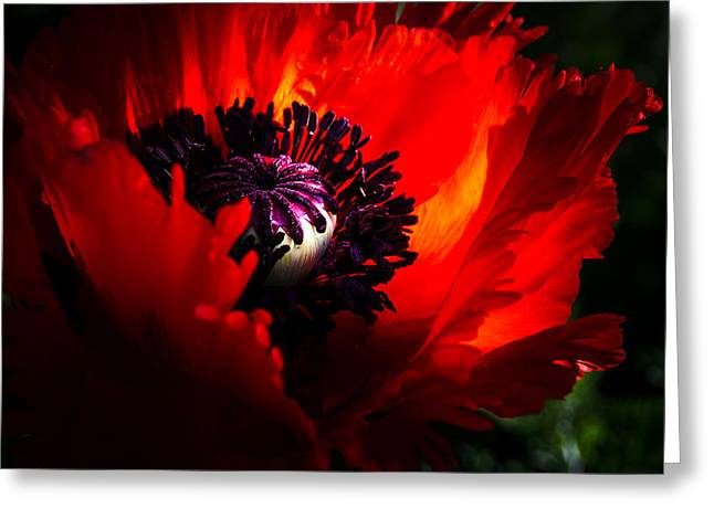 Oriental Poppy. Greeting Cards - Red Passion Oriental Poppy Greeting Card by Julie Palencia