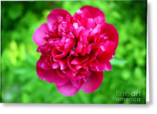 Purchase Art Greeting Cards - Red Peony Flower Greeting Card by Edward Fielding
