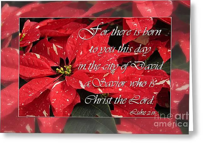 Luke 2:11 Greeting Cards - Red Poinsettias Greeting Card by Jill Lang