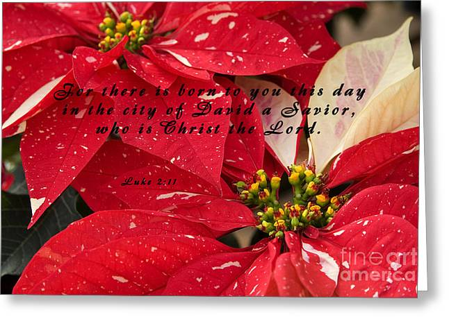 Luke 2:11 Greeting Cards - Red Poinsettias with Scripture Greeting Card by Jill Lang
