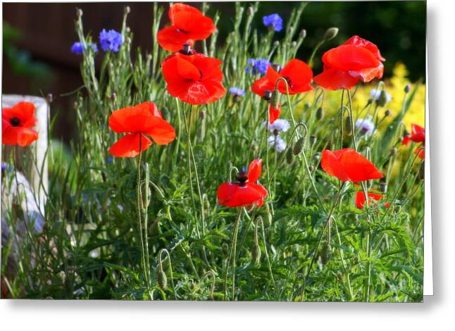 Floral Digital Art Digital Art Greeting Cards - Red Poppies And Blue Corn Flowers Greeting Card by Kay Novy