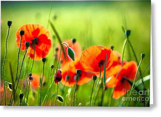 Zombies Vs Plants Greeting Cards - Red Poppies Greeting Card by Boon Mee