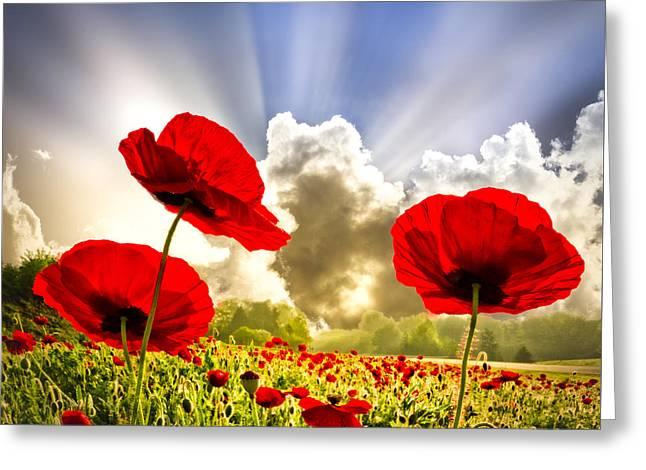Red Poppies Greeting Card by Debra and Dave Vanderlaan