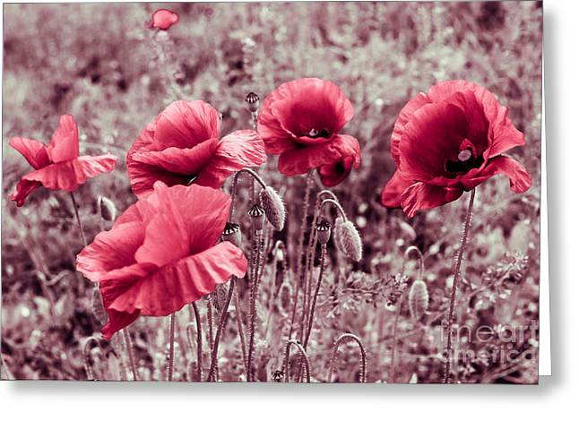 Decorativ Photographs Greeting Cards - red poppies II Greeting Card by Hannes Cmarits