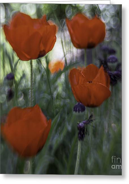 Healthy Greeting Cards - Red Poppies Greeting Card by Jean OKeeffe Macro Abundance Art