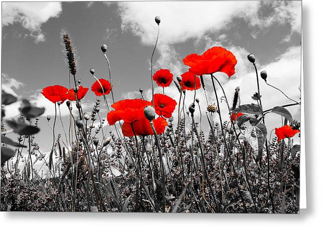 Recently Sold -  - Shower Curtain Greeting Cards - Red Poppies on black and white background Greeting Card by Dany  Lison