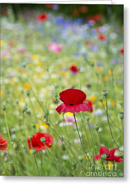 Environmentally Friendly Greeting Cards - Red Poppy and Wildflowers Greeting Card by Tim Gainey