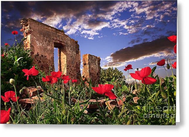 Red Poppy Field Greeting Card by English Landscapes
