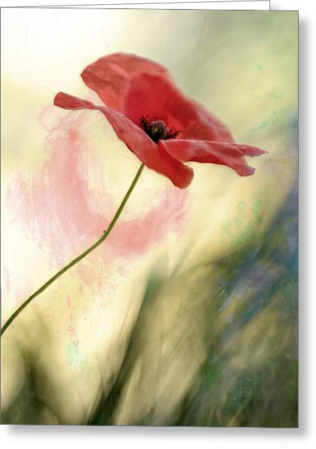 Photographs With Red. Greeting Cards - Red poppy Greeting Card by Roberto Lupini