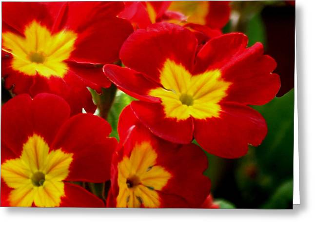 Red Primroses Greeting Card by Art Block Collections