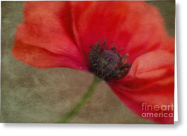 Close Up Floral Greeting Cards - Red Poppy Greeting Card by Priska Wettstein