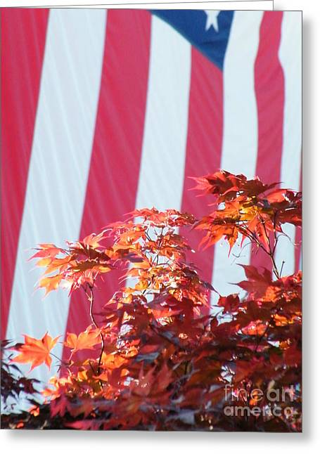 Shades Of Red Greeting Cards - Red Red Red White and Blue Greeting Card by Cheryl Hardt Art