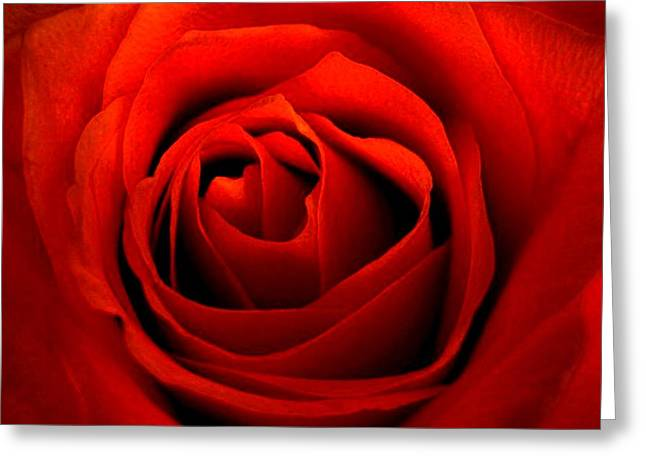 Shades Of Red Greeting Cards - Red Red Rose Painting Greeting Card by Patricia Sundik