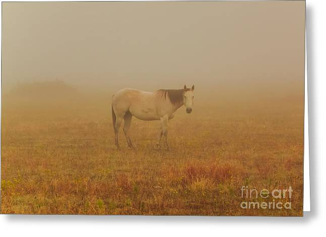 Frederick Greeting Cards - Red Roan In Mist Greeting Card by Robert Frederick