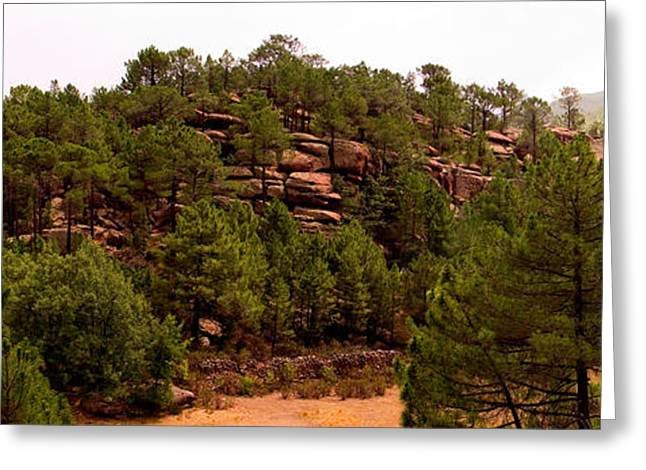 Teruel Greeting Cards - Red Rock Green Forest No3 Greeting Card by Weston Westmoreland