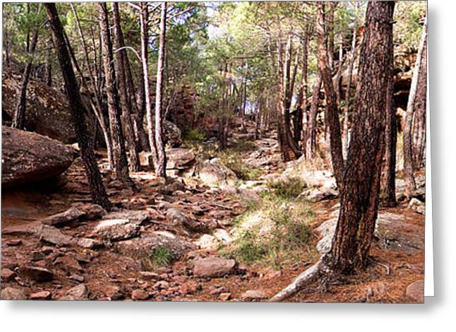 Teruel Greeting Cards - Red Rock Pine Forest Greeting Card by Weston Westmoreland