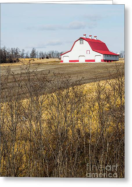 Red Roofed Barn Greeting Cards - Red Roof Barn on hill Greeting Card by IBC Stock Images