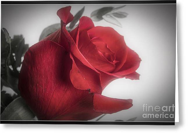 Daisy Framed Prints Greeting Cards - Red Rose 8040.02 Greeting Card by M K  Miller