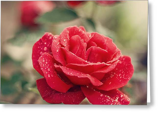 Red Rose after rain Greeting Card by Diana Kraleva