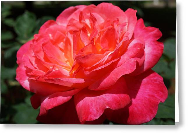 Red Rose Art Prints Vivid Bright Bold Greeting Card by Baslee Troutman