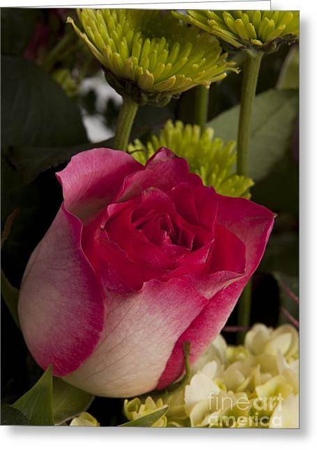 Buds Framed Prints Greeting Cards - Red Rose Bud 8033.02 Greeting Card by M K  Miller