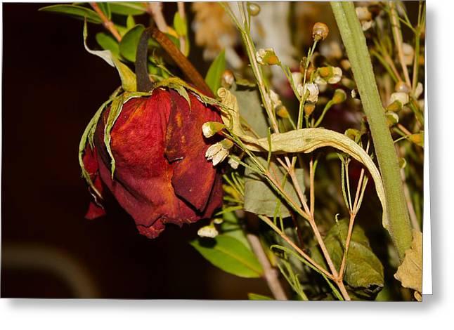 Rose Petals Greeting Cards - Red Rose Greeting Card by Carol Mallillin-Tsiatsios