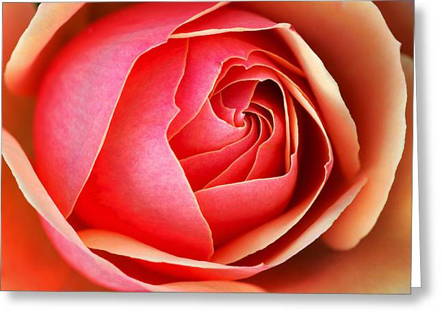 Unfold Greeting Cards - Red Rose Greeting Card by Dean Pennala