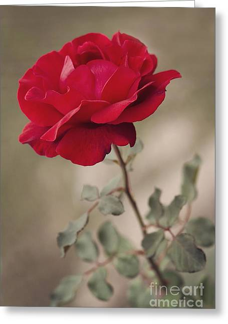 Ornamentation Greeting Cards - Red rose Greeting Card by Diana Kraleva