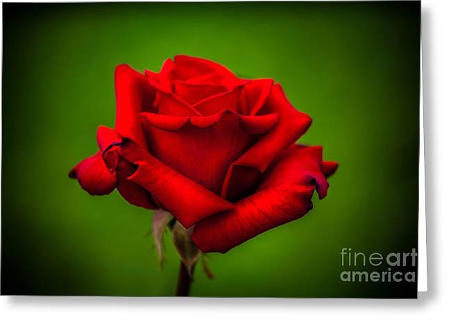 Colorful Photos Greeting Cards - Red Rose Green Background Greeting Card by Az Jackson
